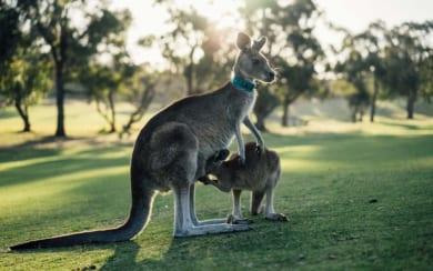Đăng ký sáng chế tại Australia (Úc) – Một số câu hỏi thường gặp