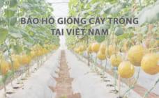 Điều kiện bảo hộ giống cây trồng theo pháp luật Việt Nam