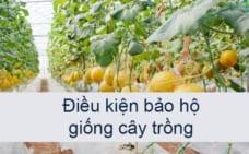 Điều kiện bảo hộ giống cây trồng tại Việt Nam 2021